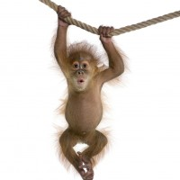 14394-high-resolution-pictures-of-monkeys