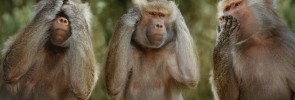 three monkeys - monkey see monkey do